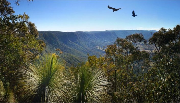 National Parks in Kyogle